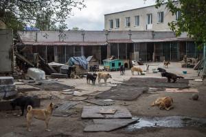 Помогли в восстановлении приюта для животных