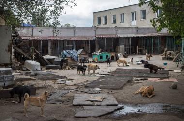 Допомогли у відновленні притулку для тварин