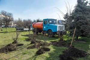 Высадили 80 новых деревьев и кустов на площади Деревянко